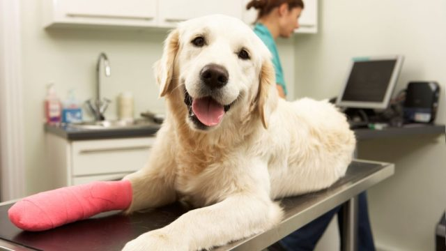 Bring your canine friend to VET clinic before taking a trip with it
