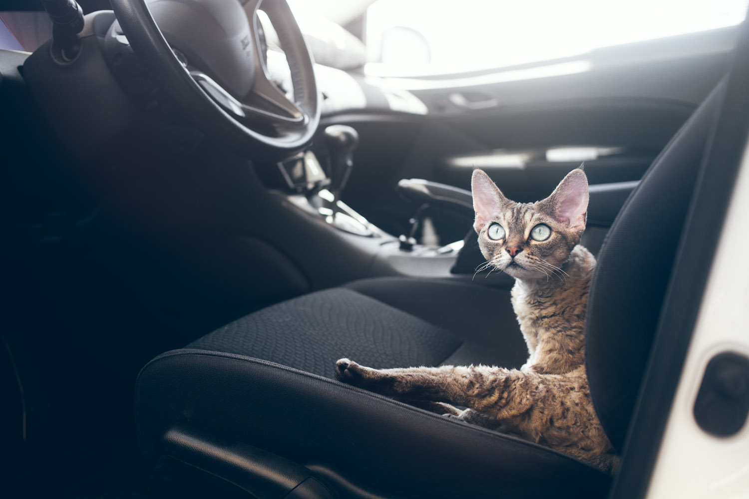 How to keep cats out of car?