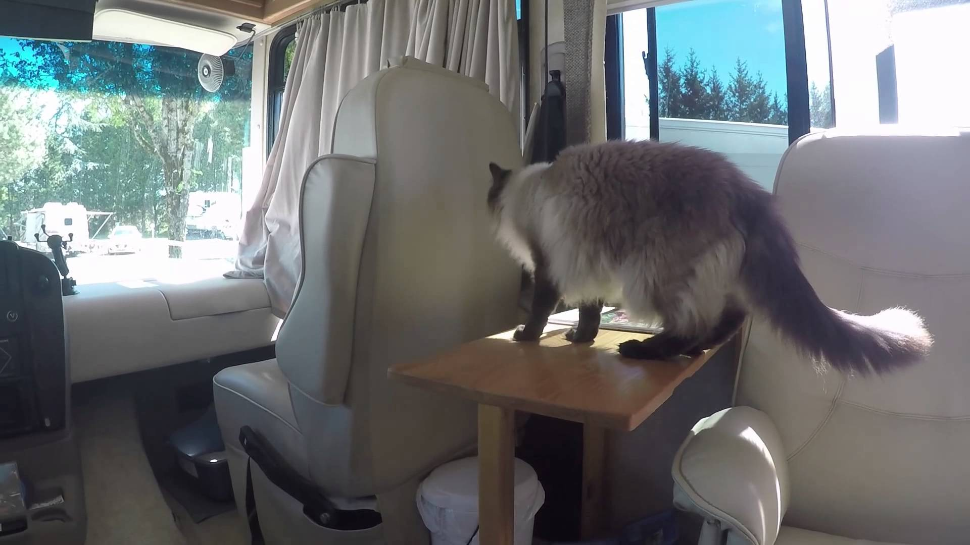 Take your cat into the RV